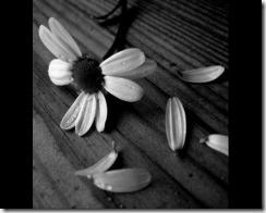 fiore-703426